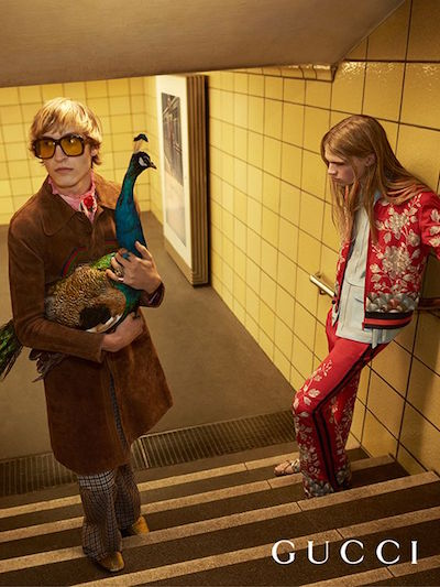 gucci ss 16 advertising peacock male